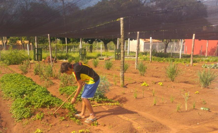 Horticultura CMT
