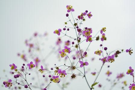 flower-870557.jpg