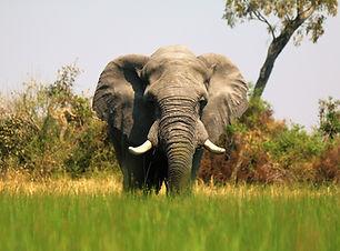 Okavango Mokoro_Delta excursion (10).JPG