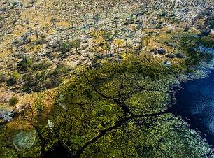 Okavango Delta_Mokoro to camp (3).jpg