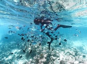 Zanzibar_snorkelling_fish (2).jpg