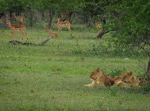 Game Drive in Kruger.jpg