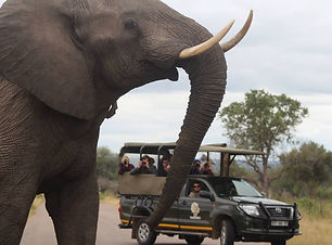 KNP game drive with elephant.jpg
