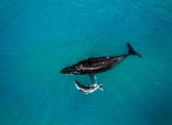 Whale & Calf, Broome
