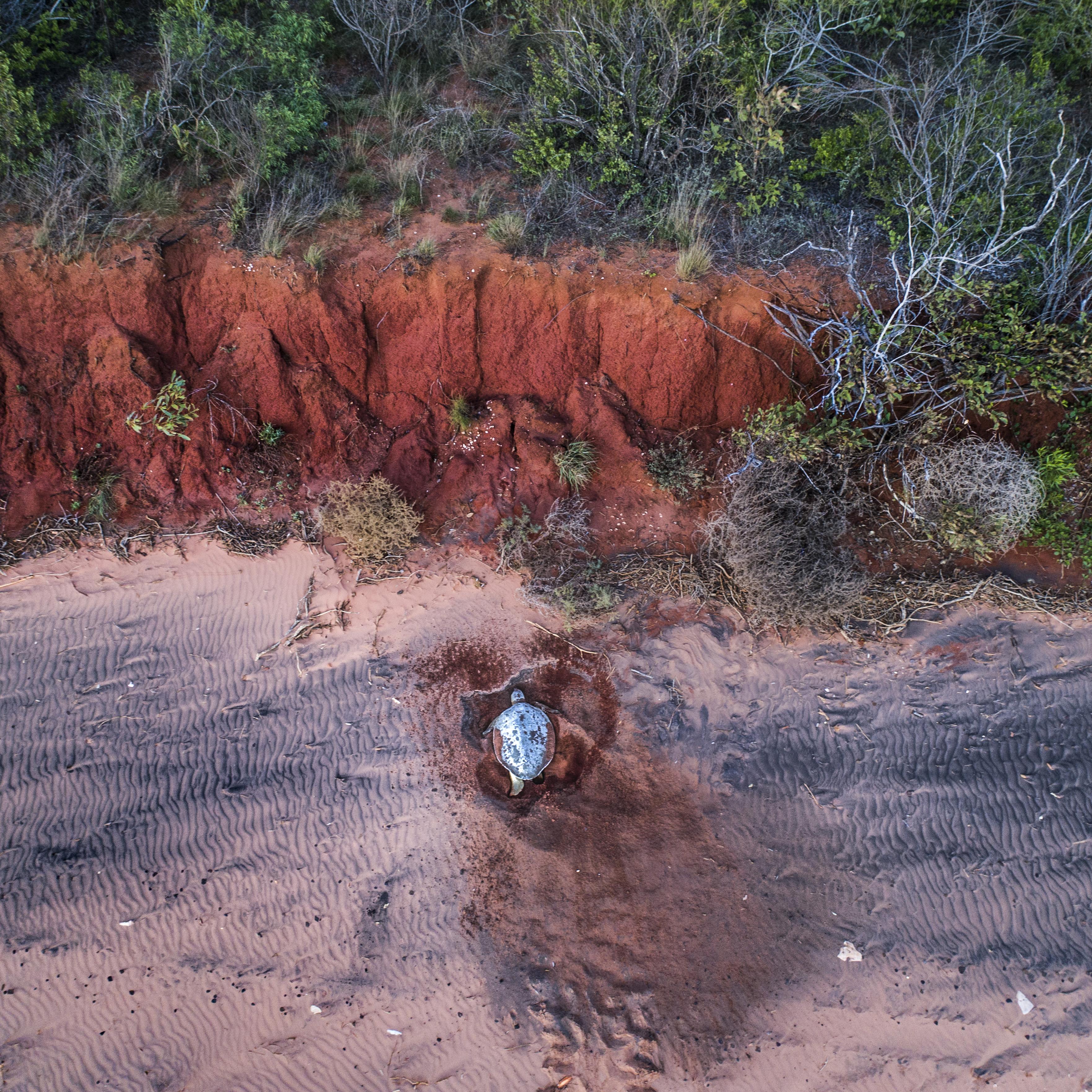 Turtle Nest Broome