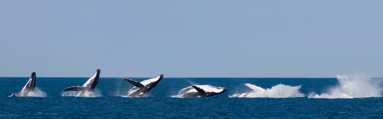 Whale Breaching, Broome