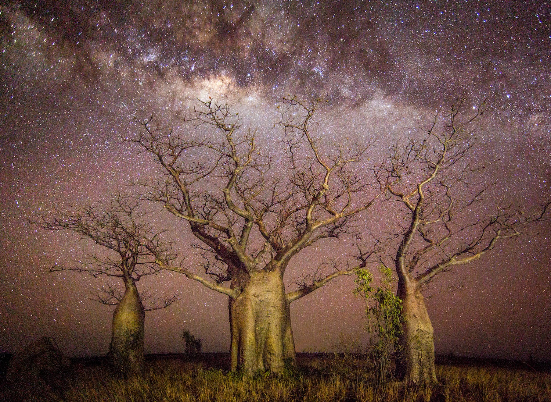 Boab Night Sky