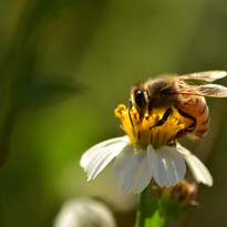 insects-2061033_1920.jpg