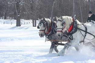 horse-drawn-sleigh.jpg