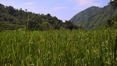 Felder in Bangle