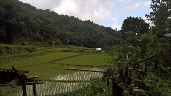 Rice terrasses in Bangle