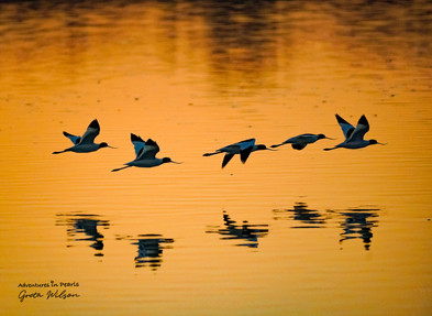 We are all mid-flight in our own evolution, and while we're flying in formation, how we advance within the flock will be uniquely at our own pace.