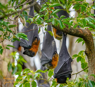 A bat doesn't think 'I don't deserve to fly, for I am not a bird'..... just as we should not allow feelings of self-doubt and imposter syndrome deprive us of a destiny we have rightfully earned.