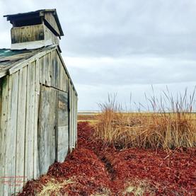 Deserted barn in Fall