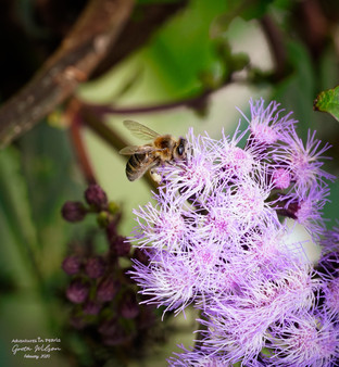 The honey bee teaches us that with tenacity and purpose, we have the power to create a more beautiful world, one in which is infinitely bigger than ourselves.