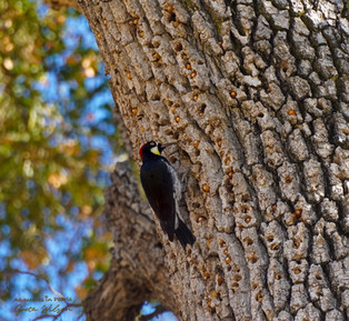 Three of the most powerful animals on earth could fit in the palm of your hand: A small Woodpecker can hole-out an entire hardwood tree with its beak. Size and status are irrelevant when there is passion and determination.