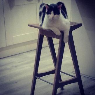 designbynebabbott, bar stool & Wellington.