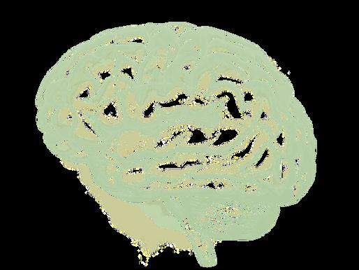 5. Optimize Mental stimulation & creativity