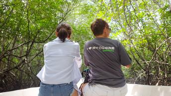 10 Reasons Why I Plant Mangroves!