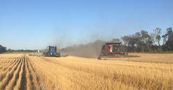 seeding behind the combine
