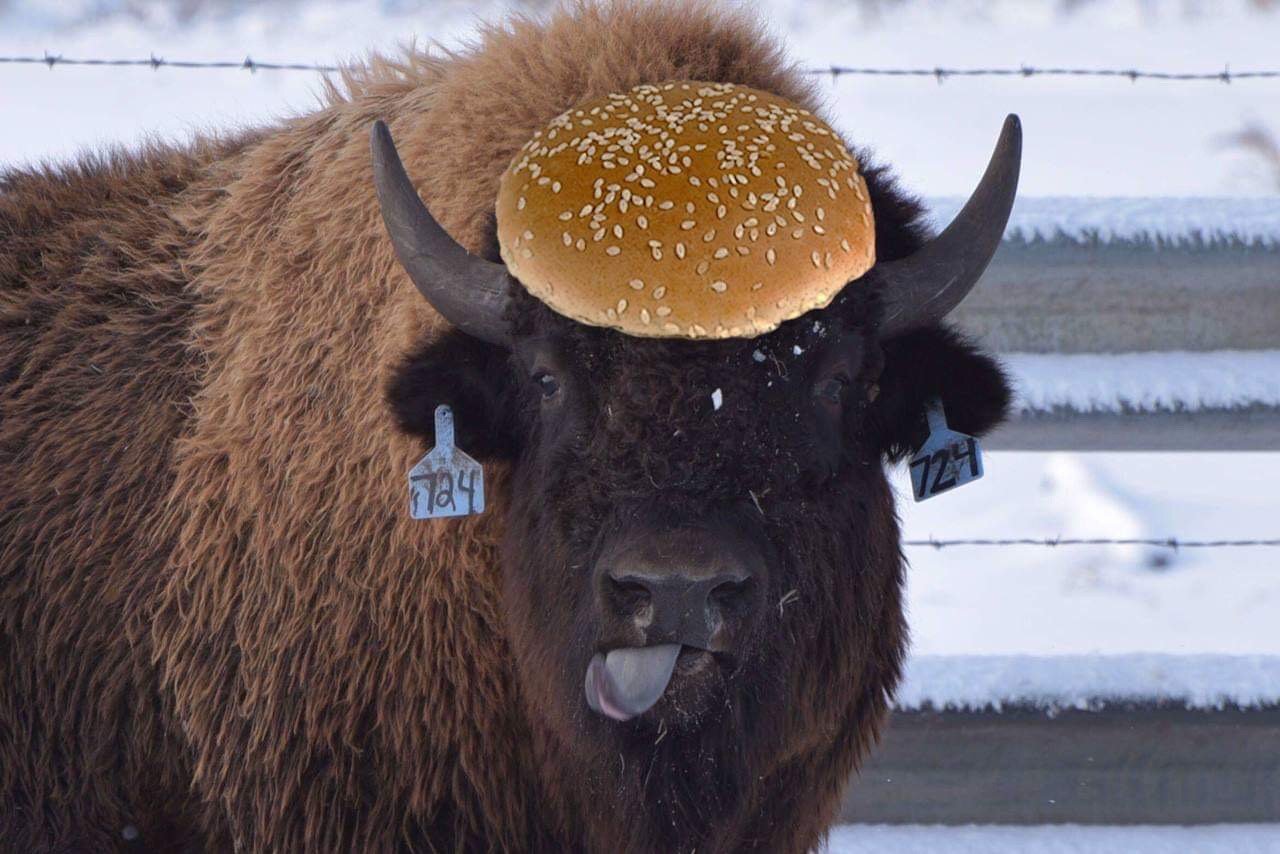who likes a bun with their bison?