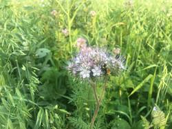 diversity brings pollinators