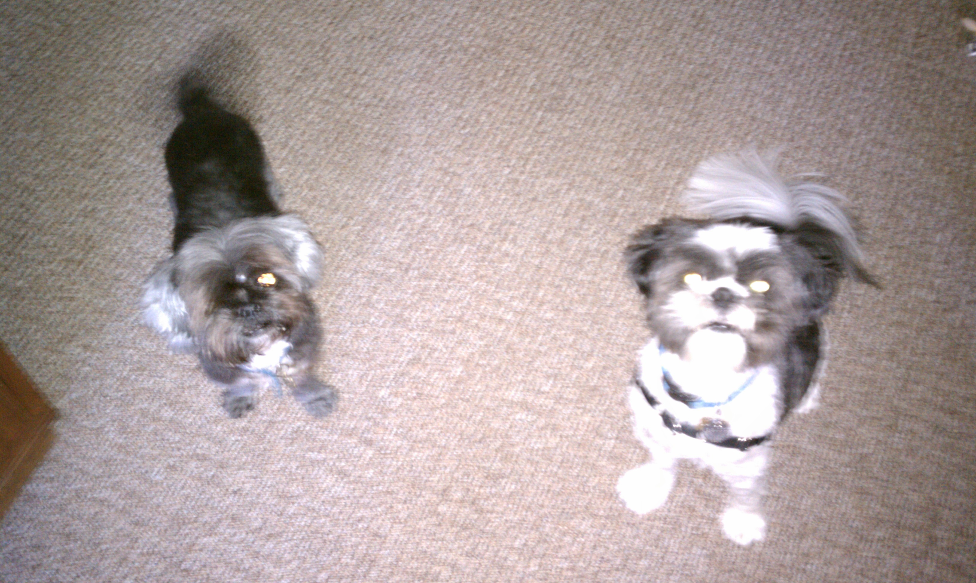 Murphy & Poochie