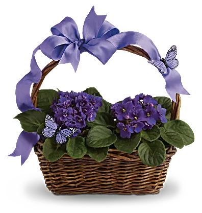 Violets and Butterflies 44.95