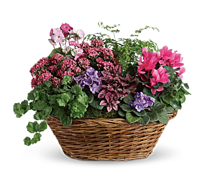 Mixed Plant Basket 97.95