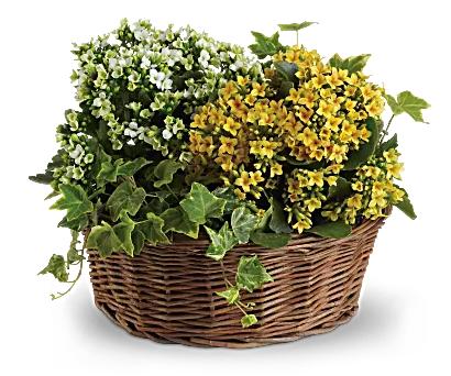 Basket of Joy