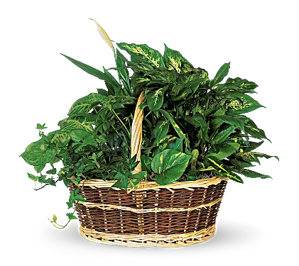 Large Basket Garden 92.95