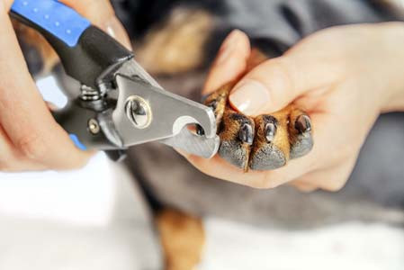How often should I clip my pet's nails?