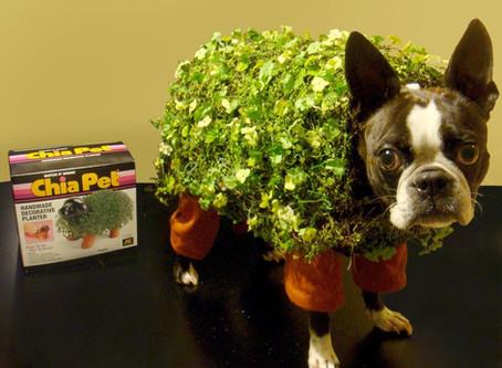 DIY Pet Costumes That Made Us LOL