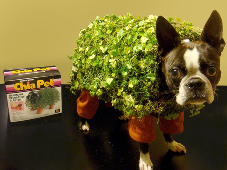 DIY Pet Costumes That Made Us LOL