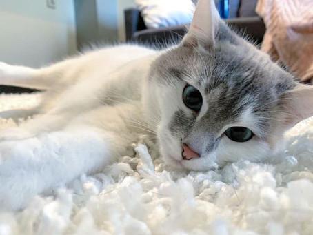 5 Amazing Cat Facts