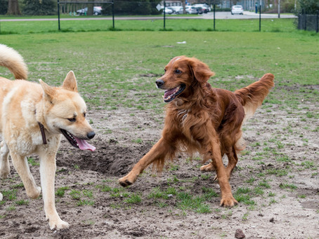 Play Nice at the Dog Park