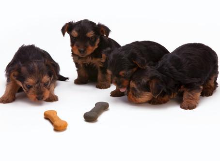 Giving Pets Treats: A Few Tips!