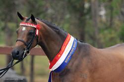 Champion Riding Pony Mare