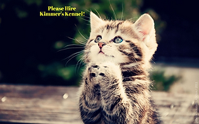 The Best Pet Sitters in Oklahoma City, Oklahoma