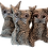 Thumbnail: Grumpy Kat