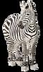 Zebra-PNG-Transparent-Image.png