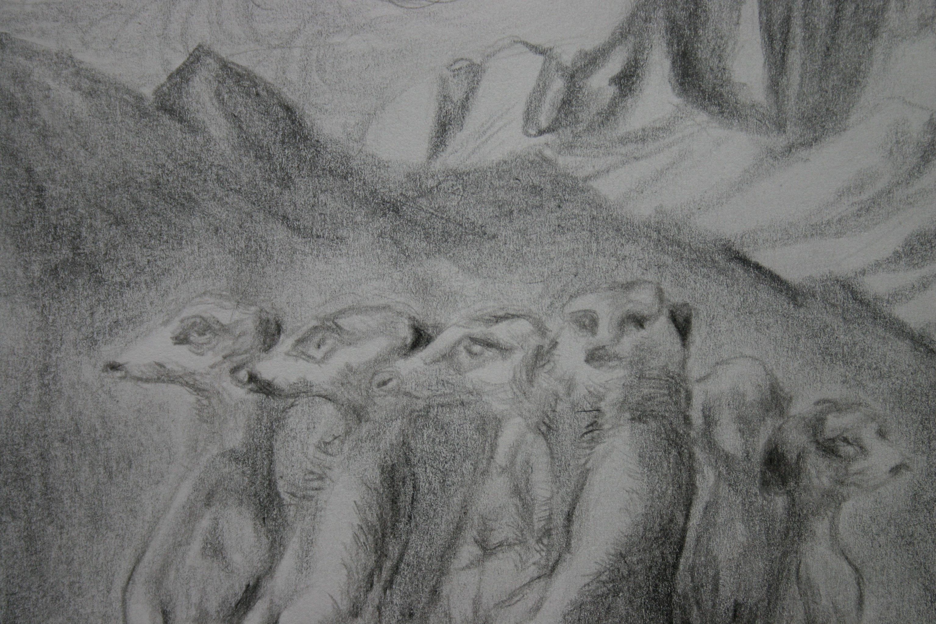 Meercats (detail; pencil)