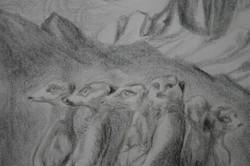 Meercats (detail; pencil)