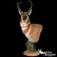 antlelope.png