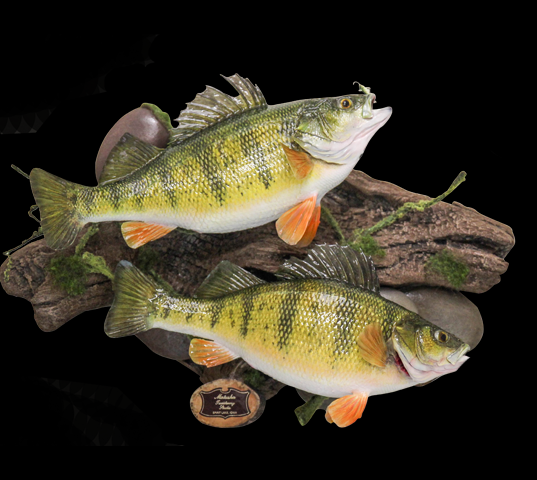 FishSkinGallery.png