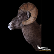 JeffLappe-RMBigHorn-2019-side.png