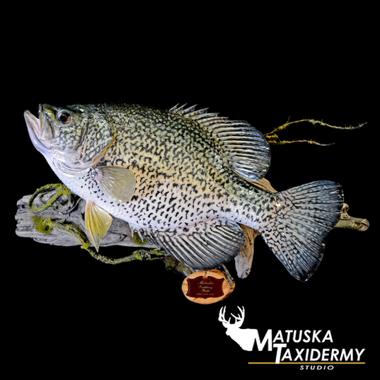 crappie.png