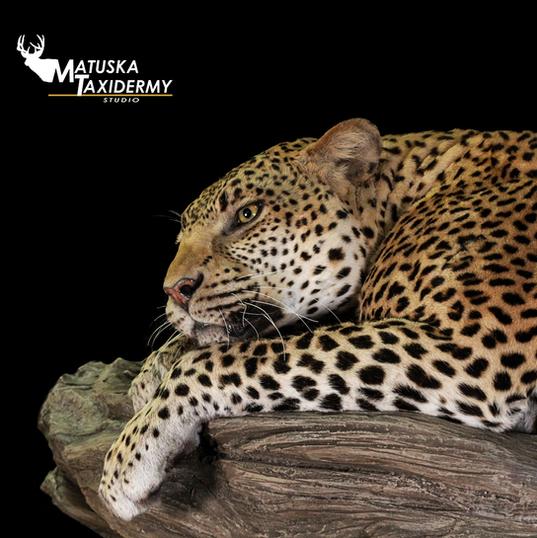 Leopard2.png