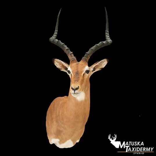 impala.png
