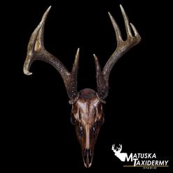 BronzeSkull.png